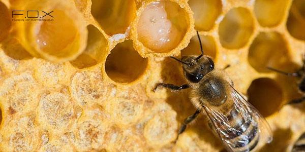 Sữa ong chúa có tác dụng gì cho da