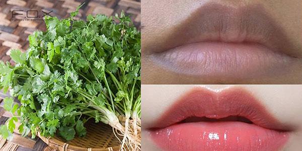 Cách dùng rau mùi chữa môi thâm nhanh chóng, hiệu quả