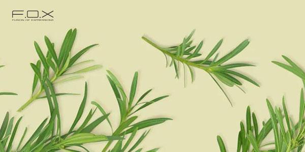 Cách trị sưng môi với chiết xuất dầu tràm trà